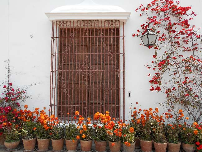 exterior de una casa con plantas