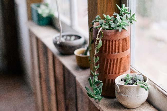 Plantas en el interior de un apartamento