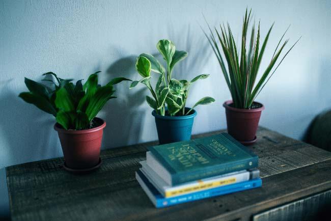 Libros sobre una mesa con plantas