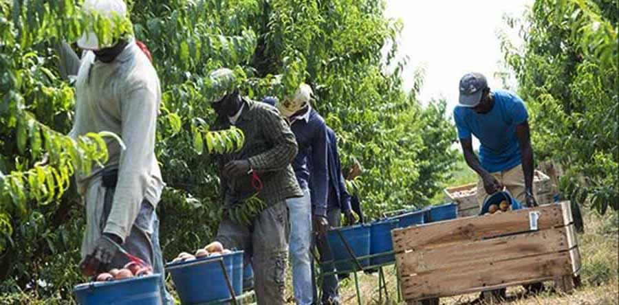trabajadores agricultura